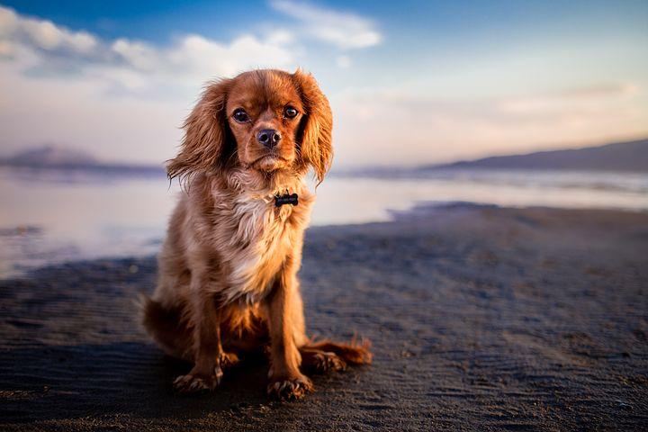 Comment faciliter la bonne entente entre un chien et un enfant ?