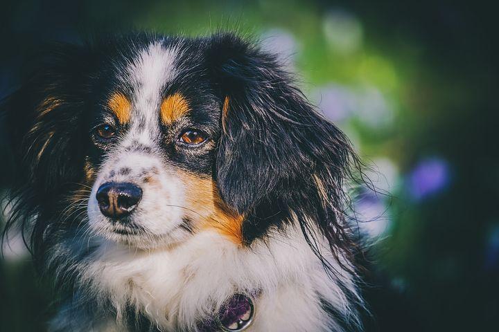 Pourquoi vermifuger son chien ?