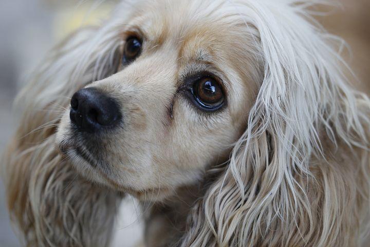 Mon chien a-t-il des problèmes de poils ?