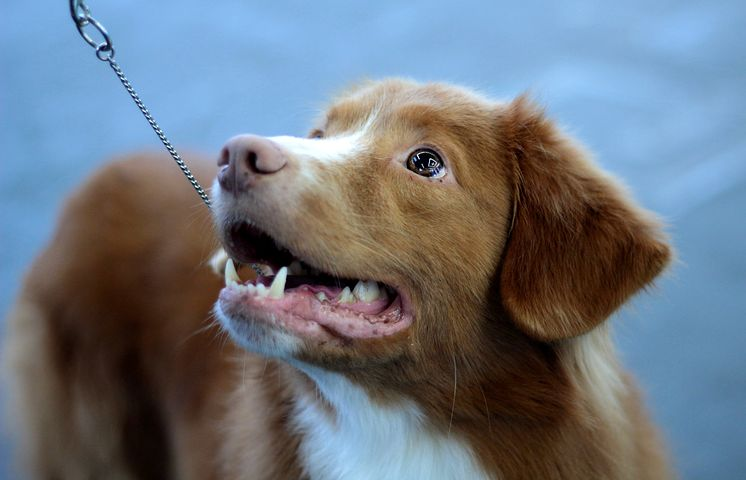 Vétérinaire pour chien : pourquoi faire régulièrement une visite de contrôle ?