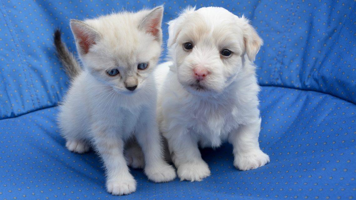Peut-on faire cohabiter un chien et un chat?